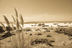 Coastal image in sepia. Royalty Free Stock Photo