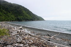 Coastal Island Beach. A stony coastal beach located at the northern end of Kapiti Island, New Zealand Stock Images