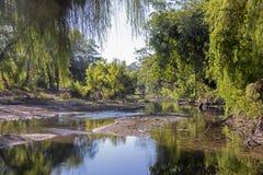 Coastal jungle river stock images