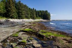 Botanical beach. Coastal landscape at Botanical Beach in the Juan de Fuca Provincial Park near Port Renfrew on Vancouver Island, British Columbia, Canada Royalty Free Stock Image