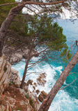 Coastal landscape. Pine trees grow on the rocks Stock Photo