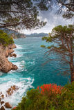 Coastal landscape. Red flowers and pine trees. Grow on the rocks. Adriatic Sea, Montenegro stock photos