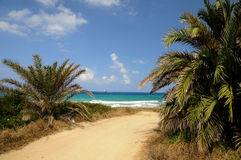 Coastal lanscape under palms in Cyprus Stock Image