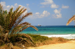 Coastal lanscape under palms in Cyprus Royalty Free Stock Photos
