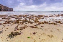 Coastal location around Trevaunance cove in cornwall england uk.  Stock Photo