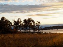 Coastal Maine Sunset with Autumn Colors. A coastal Maine sunset with trees and grass turned golden in autumn royalty free stock photos