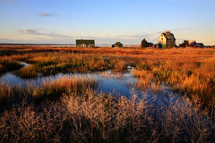 Coastal Marsh Stock Photography