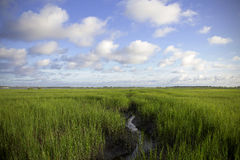 Coastal Marsh Royalty Free Stock Images