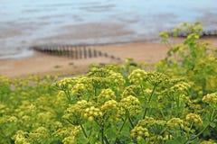 Coastal nature Royalty Free Stock Photo