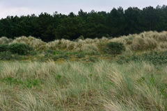 Coastal nature and pinery in the distance, Northern Sea, Holkham beach, United Kingdom Royalty Free Stock Photography