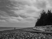 Coastal Nomad. A lone hiker wanders the rocky beach of Rebecca Spit Stock Photo