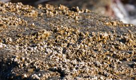 Coastal organisms Royalty Free Stock Photo