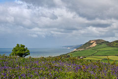 Coastal Overlook From Eype, Dorset Royalty Free Stock Photo