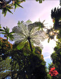Coastal Palms. Tall, beautiful trees cover Hawaii's east side giving the viewer an amazing perspecitve of how small we are in grander picture Royalty Free Stock Photo