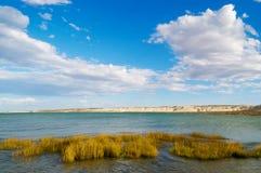 Coastal Patagonia. Near Puerto Madryn, Chubut, Argentina Royalty Free Stock Photo