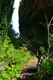 Coastal Path in Great Barrier Island Stock Images