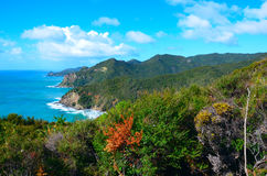 Coastal Path in Great Barrier Island Stock Image