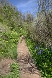Coastal Path in Spring Royalty Free Stock Image
