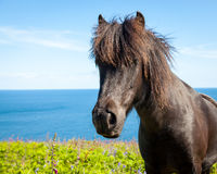 Coastal Pony Royalty Free Stock Photography