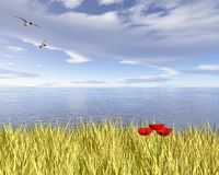Coastal Poppy Field. Digital render of a golden corn or wheat field with red poppies overlooking the sea Royalty Free Stock Photography