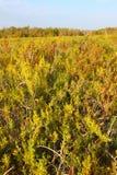 Coastal Prairie Landscape Everglades Stock Photography