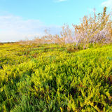 Coastal Prairie Landscape Everglades Royalty Free Stock Photography