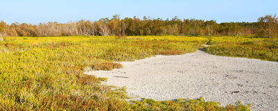 Coastal Prairie Landscape Everglades Stock Photos
