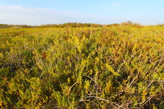 Coastal Prairie Trail - Everglades Royalty Free Stock Image