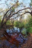 The Coastal Prairie Trail in Everglades National Park. Small pond near the trailhead of the Coastal Prairie Trail in Everglades National Park, Florida stock image
