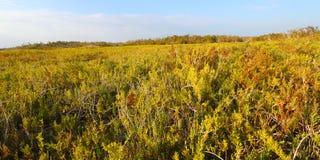 Coastal Prairie Trail Florida Everglades Royalty Free Stock Images