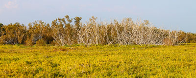 Coastal Prairie Trail Panorama Royalty Free Stock Images