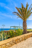 Coastal promenade with palm trees Stock Photo