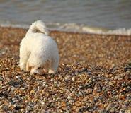 Coastal puppy dog Stock Image