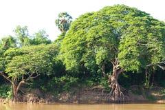Coastal River Roots Royalty Free Stock Photo