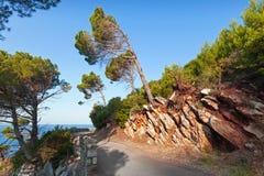 Coastal road with pine trees Stock Photography