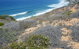 Coastal Sage Community in the Dana Point Headlands Conservation area. Image shows part of the protected Coastal Sage Community in the Dana Point Headlands stock image
