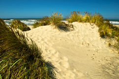 Coastal Sand Dune Royalty Free Stock Photos