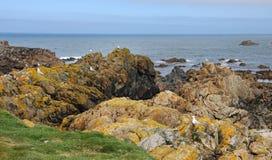 Coastal scene in Guernsey with sea birds on the rocks Stock Photos
