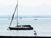 Coastal sea-gull and boat Stock Photos