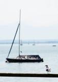 Coastal seagull with boat Royalty Free Stock Photos