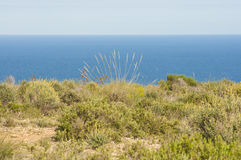 Coastal steppe Royalty Free Stock Photography