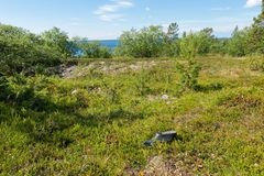 Lost boot. The coastal strip of the White Sea and tundra vegetation on the island of Anzersky stock photos