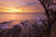 Coastal sunset framed by a tree at Borneo Royalty Free Stock Photos