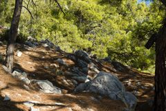 Coastal trail for hiking in pine tree forest near Kemer, Turkey Royalty Free Stock Photo