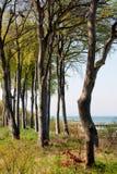Coastal Tree Royalty Free Stock Photography