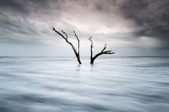 Coastal Tree Folly Beach Charleston South Carolina Stock Image