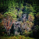Coastal trees Stock Images