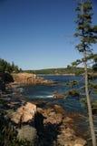 Coastal trees and granite ledges Royalty Free Stock Image