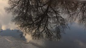 Coastal trees are reflected in the freezing lake. Coastal trees are reflected in a freezing lake with thin ice near the shore stock video footage