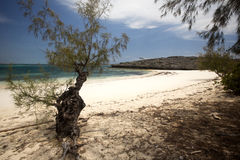 Coastal vegetation Amoronia orange bay, north of Madagascar Stock Photography